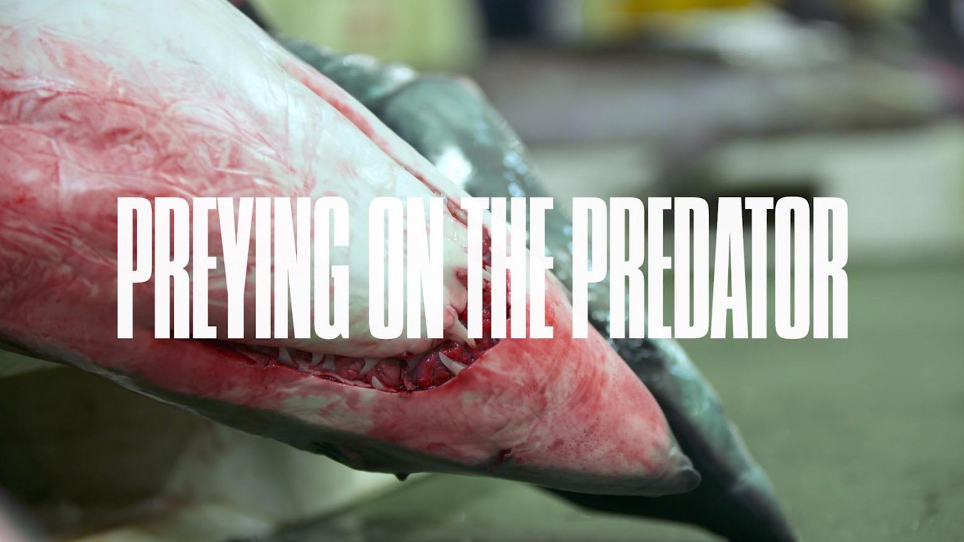 galeria-01-preying-on-the-predator